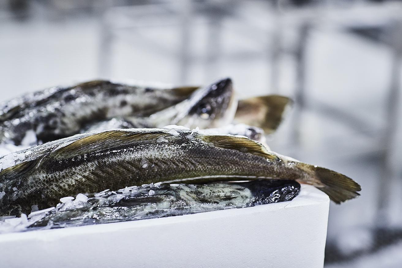 Fiskeskæl og skind i iskasse